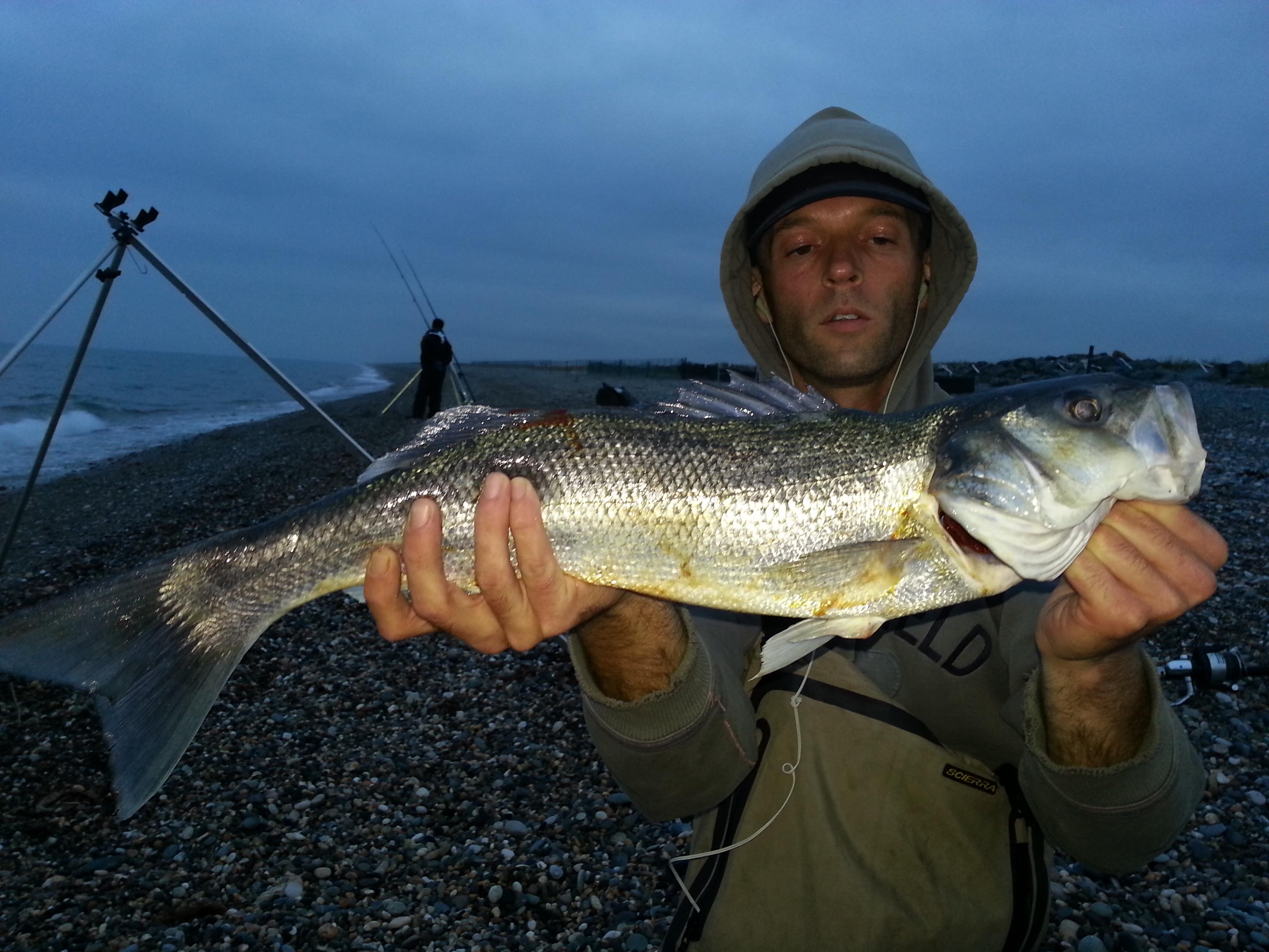 Wicklow Bass