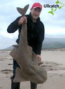 Est. 65lb monkfish for John Tobin