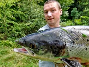 fine-salmon_0