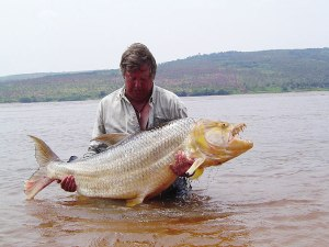 Mbenga 38kg Goliath tiger fish