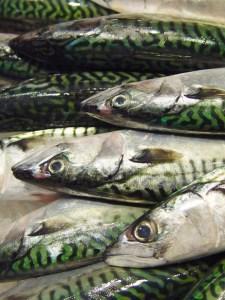 Fresh mackeral best allround bait