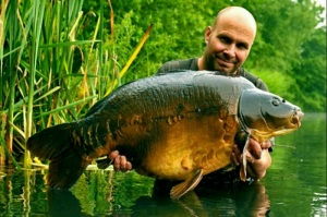 Hendrix 42.6 lb Cleverly Mere