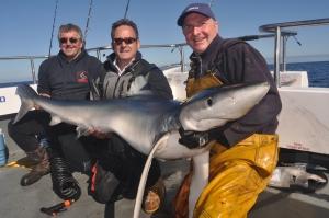 167lb blue shark