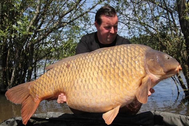 Perfect common 84lb