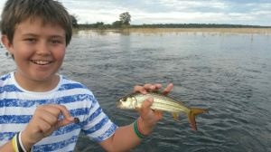 We have a lot of fun catching these small tigerfish when the flood plains are full of water