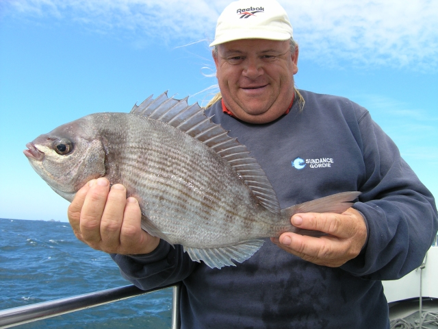 English channel black bream, caught from a wreck
