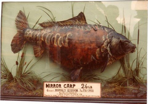 Albert Buckley's 1930 record carp
