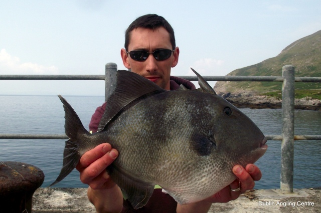 A specimen triggerfish from county Kerry