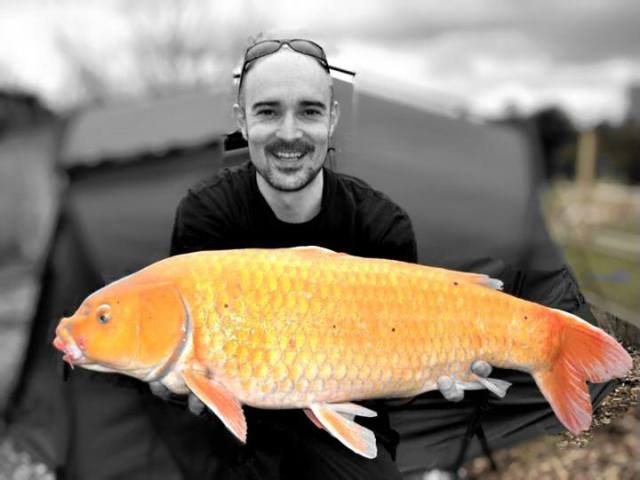 Tim with a koi known as Kylie