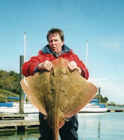 A big blonde ray from Cork harbour