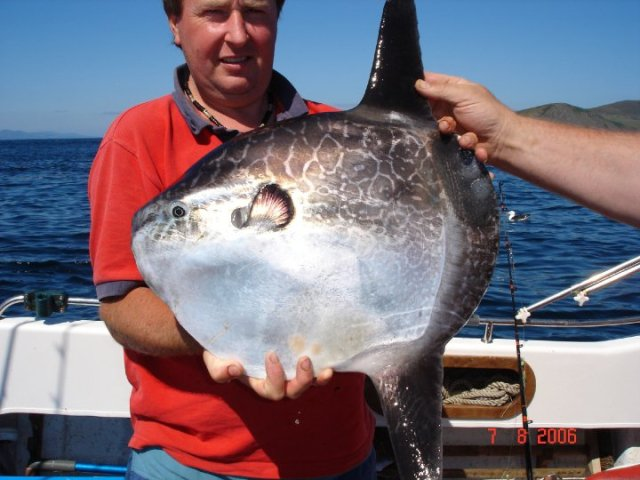 Tony with a rarely caught sunfish