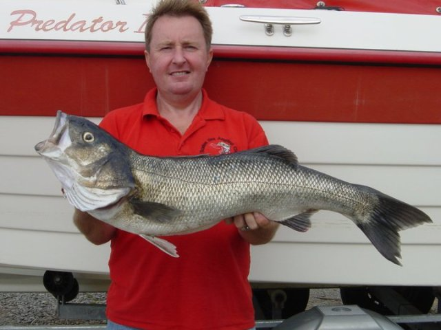 6.36 kg bass from Cork harbour
