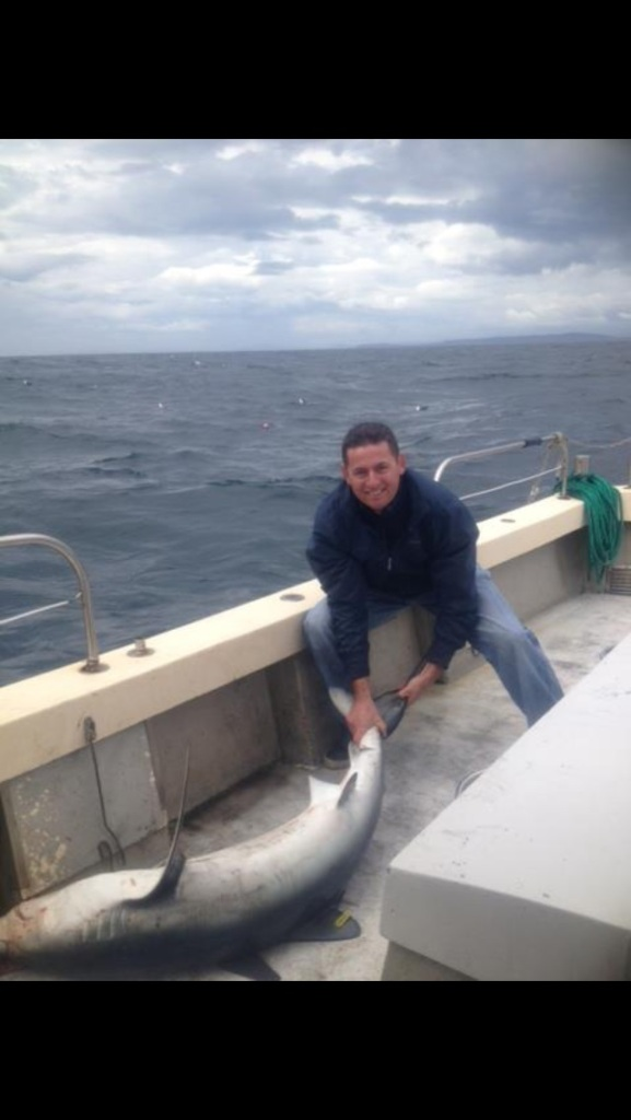 West Cork Blue shark