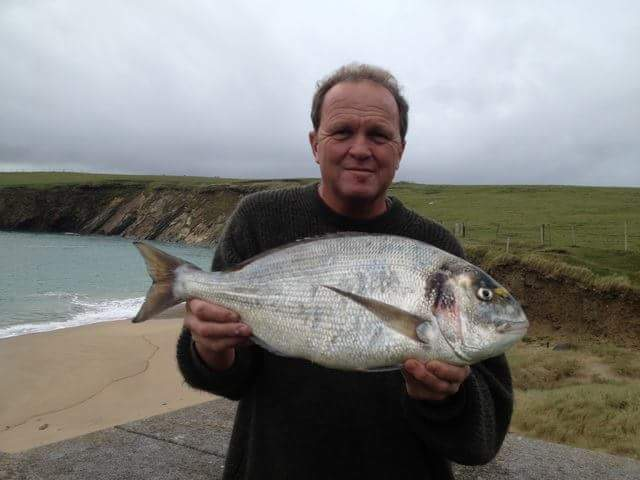 Gilthwad bream