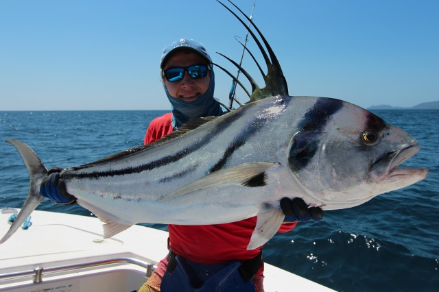 A roosterfish from Panama
