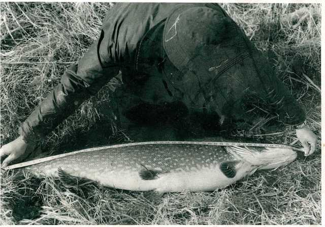 Neville's mammoth 41lb 6oz pike, a British record