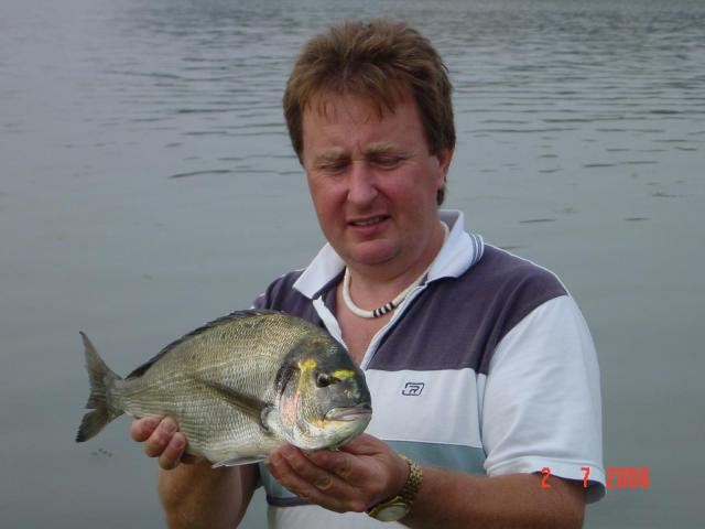 Gilthead Bream 4